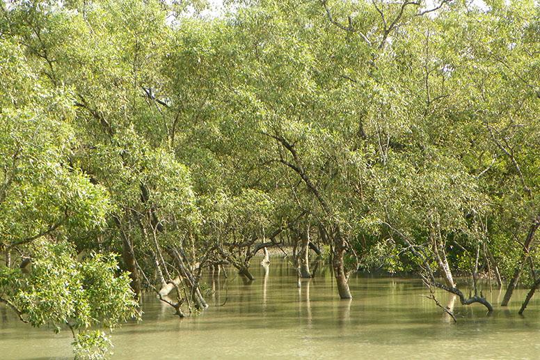 Kolkata Sundarbans national park