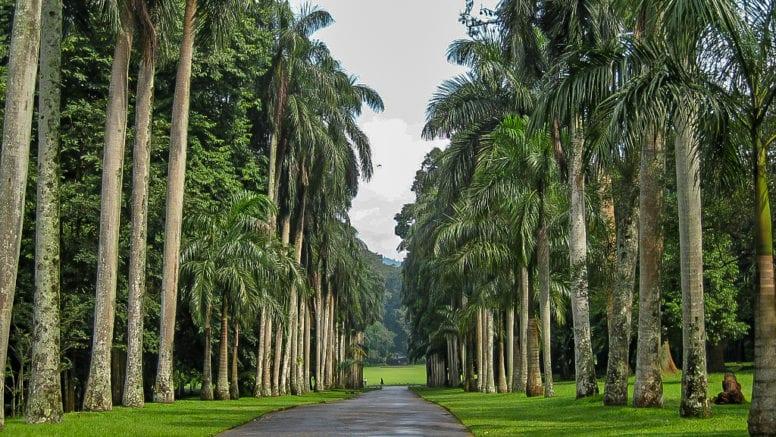 Kandy Royal Botanical Gardens